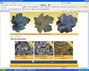 Heuchera screenshot